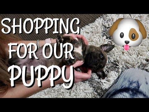 SHOPPING FOR OUR NEW DOG
