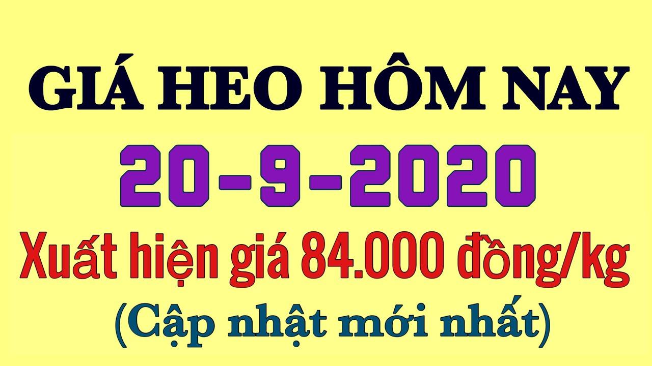 Giá heo hơi hôm nay 20/9/2020 - Xuất hiện mức giá kỷ lục 84.000 đồng/kg