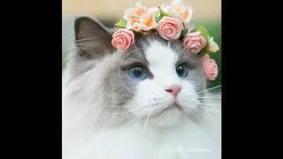 Найдена самая красивая кошка в мире!