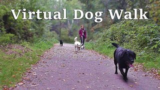 Calming Dog Walking TV : Woodland Walk - Virtual TV for Dogs