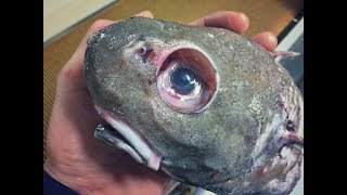 Strangest Creatures Found in the Water