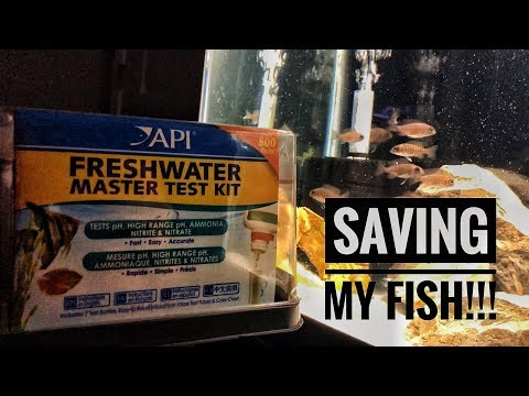 LOWERING AMMONIA IN A FISH TANK! | Hints & Tips