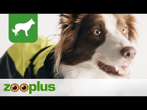 Hundemantel | Hundejacke Illume Nite Neon | zooplus