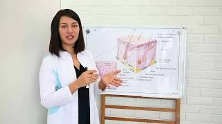 Анатомия и функции кожи / электроэпиляция / обучение электроэпиляции