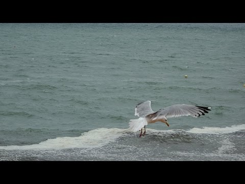 Rainy Day Song ~ Neil Diamond