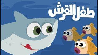 اغنية طفل القرش | بيبي شارك روعة | اغاني اطفال قناة جود بيبي