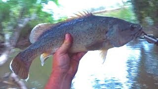 Twig water Murray cod fishing at its best