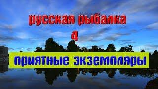 Русская рыбалка 4(рр4) - Приятные экземпляры за ноябрь.
