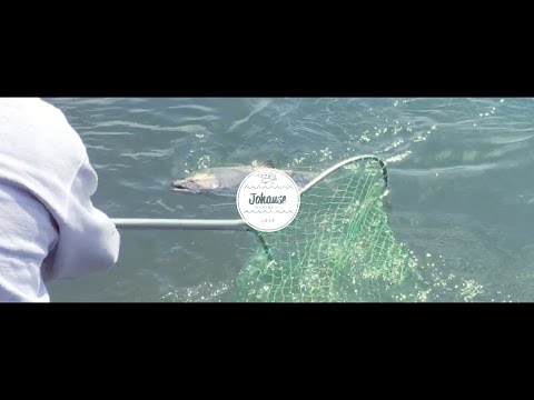 BIG Chinook | Riffe Lake