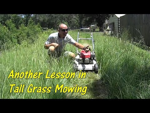 How To Cut Tall Gr Learning Take Back Your Lawn