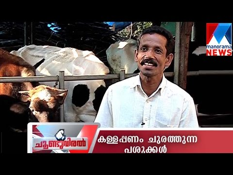 The cooperative bank crisis has badly hit ordinary farmers' lives | Manorama News