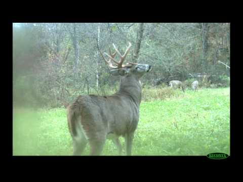 Use Weather Patterns to Hunt Nocturnal Bucks - Deer Hunting