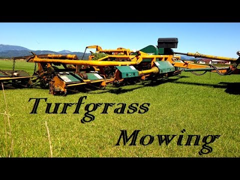 9 Gang Reel Lawn Mower - Sod Farm Mowing