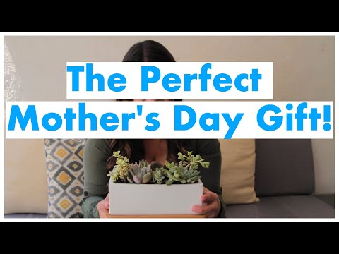 Ryan Seacrest - Create an Easy Succulent Arrangement for Thoughtful Mother's Day Gift