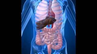 The Benefits of Dietary Fiber (Psyllium Hulls Combination)