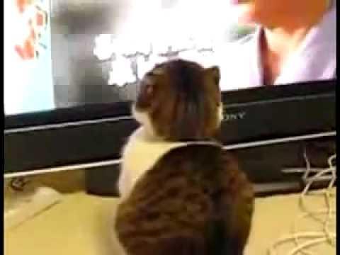 Le Chat Au Regard Terrifian