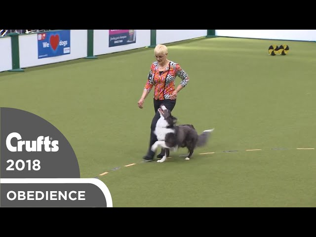 Obedience - Dog Championship - Part 9 | Crufts 2018