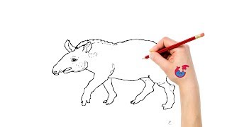 How To Draw Animals For Toddlers Tapir - Learning Drawing - Puzzle Kid