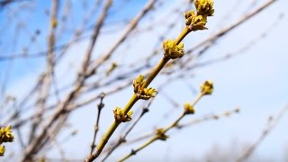 Башкортостан. Весна.....