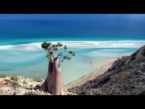Facts About Socotra - strangefacts
