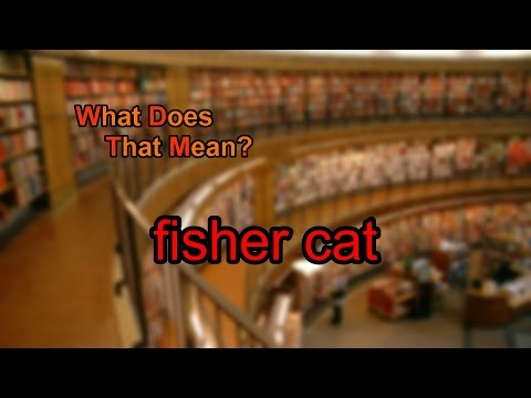 What does fisher cat mean?