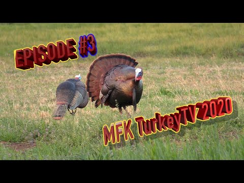 Turkey Hunt In Middle Tennessee Spring Gobbler Season 2020 MFK Ep.46