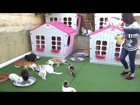 فيديو.. فلسطينية تحول حديقة منزلها إلى ملجأ حقيقي للحيوانات الضالة …  - نشر قبل 52 دقيقة