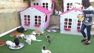 فيديو.. فلسطينية تحول حديقة منزلها إلى ملجأ حقيقي للحيوانات الضالة …