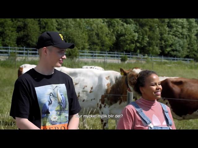 Thumbnail of video called Mistä maito tulee feat Isac Elliot ja lehmät