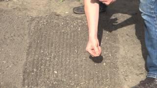 how to plant arugula