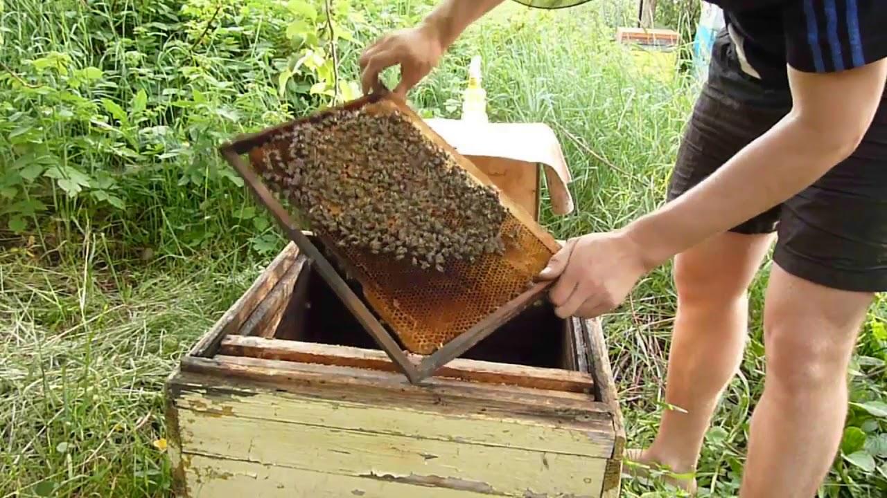 Смотреть видео Ловля бродячих пчелиных роев на v4k.online бесплатно