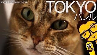 Kocia Kawiarnia - LOL? [Tokyo, Japonia] - Japanese Cat Cafe /w English Subtitles