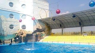 Дельфинарий, г. Одесса(, 2014-04-01T22:10:36.000Z)