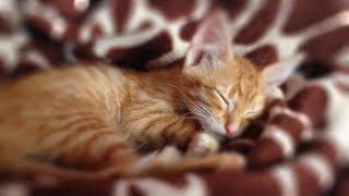 Подобрали еще одного бездомного котенка