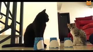 「かわいい猫」 笑わないようにしようとしてください - 最も面白い猫の映画 #169