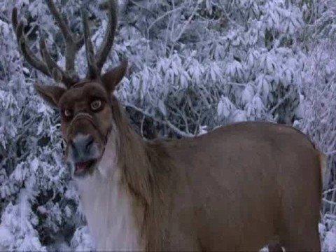comet the reindeer 2 - Reindeer Images 2