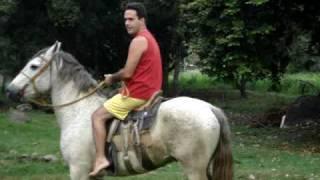 Cavalo branco bravo..