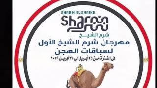 Camel Racing , La Corsa dei Cammelli - 25 Aprile 2019