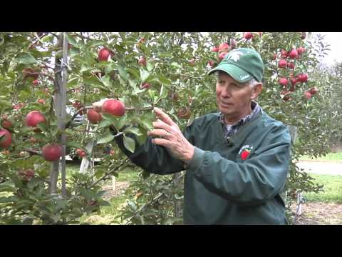 Ridge orchard revisits hedging practice