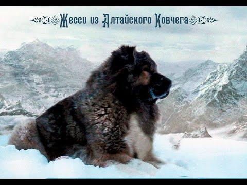 Жесси из Алтайского Ковчега