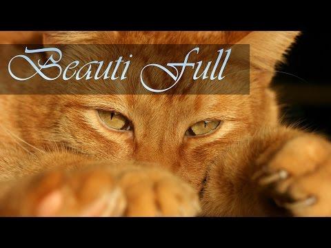 Кошки, фотографии и обои на рабочий стол