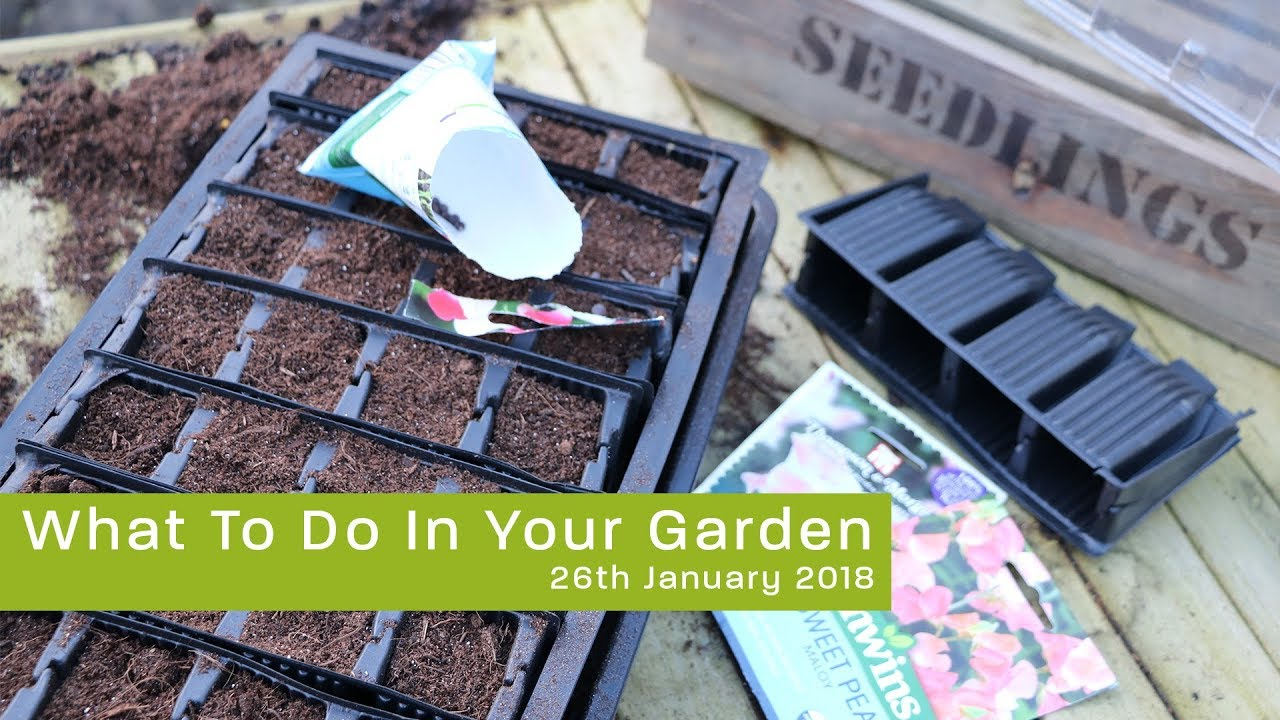 What To Do In Your Garden 26th January 2018 Youtube