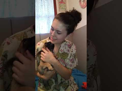 Irena # 1 Girl - French Bulldog Puppies ~ Oregon French Bulldog Breeders