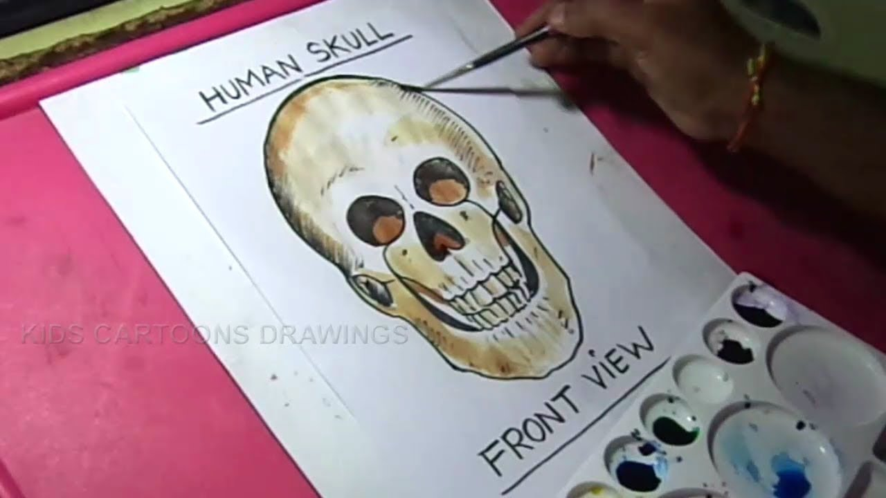 How To Draw Human Skull Front View Drawing For Kids Youtube