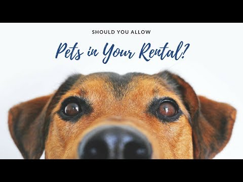 Should You Allow Pets in Your Groton Rental Property? Pros and Cons Explained