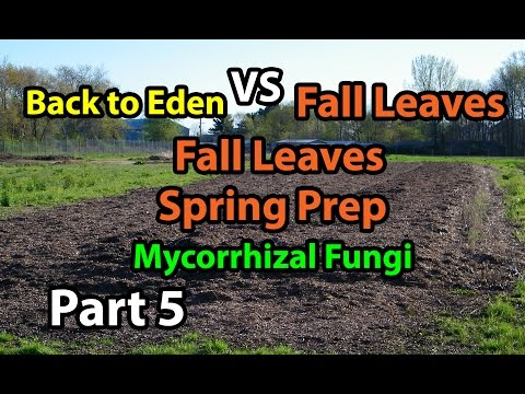 Back to Eden Organic Gardening 101 Method with Wood Chips VS Leaves Composting Garden Series #5