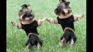 Compilation Of Dogs Dancing Salsa  | WEEKLY COMPILATION | GGL