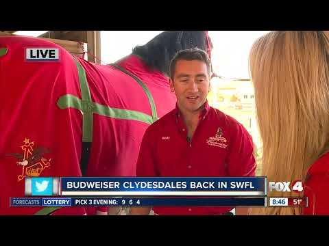 Amy Lynn - The Budweiser Clydesdales Are In SWFL!!