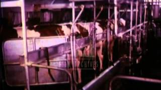 The Importance of Milk, 1970's - Film 7331