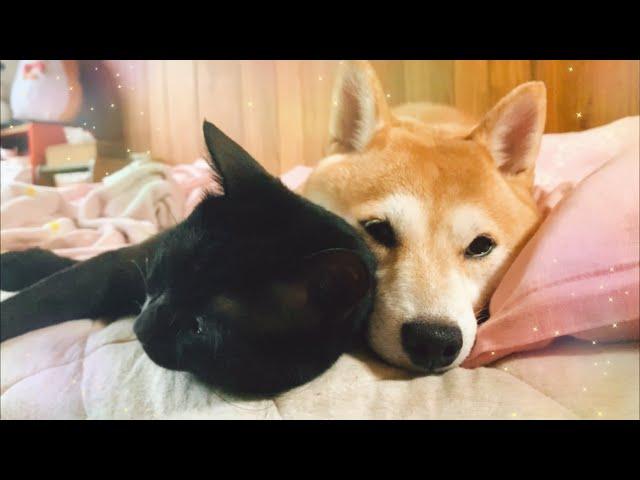 ??????????????? Happy dog loves cats